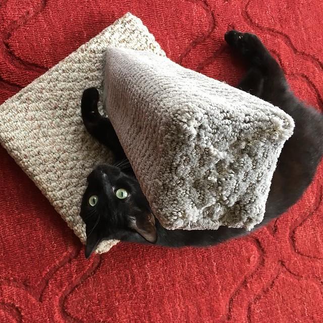 Macskabútor kedvező áron