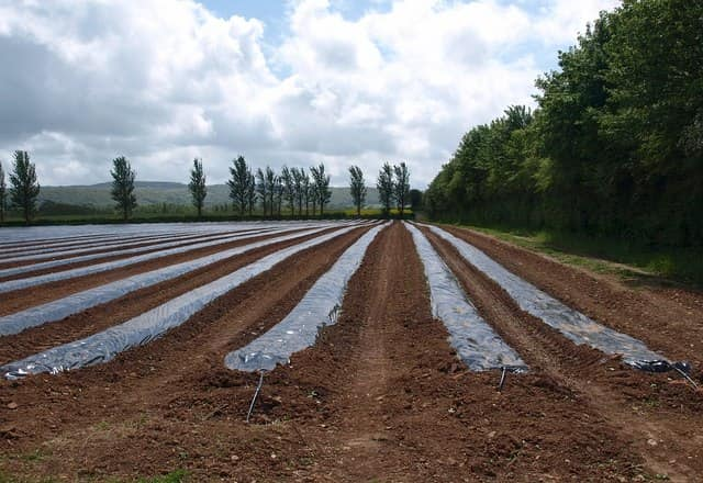 Mezőgazdasági fólia a növények letakarására